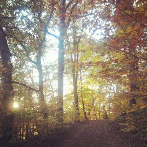 Waldweg im herbstlich gelb-braunen Wald